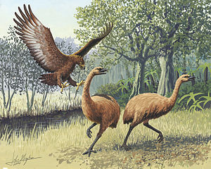300px-Giant_Haasts_eagle_attacking_New_Zealand_moa